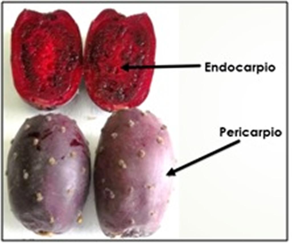 Microencapsulación de pigmentos naturales obtenidos de la cáscara y ...