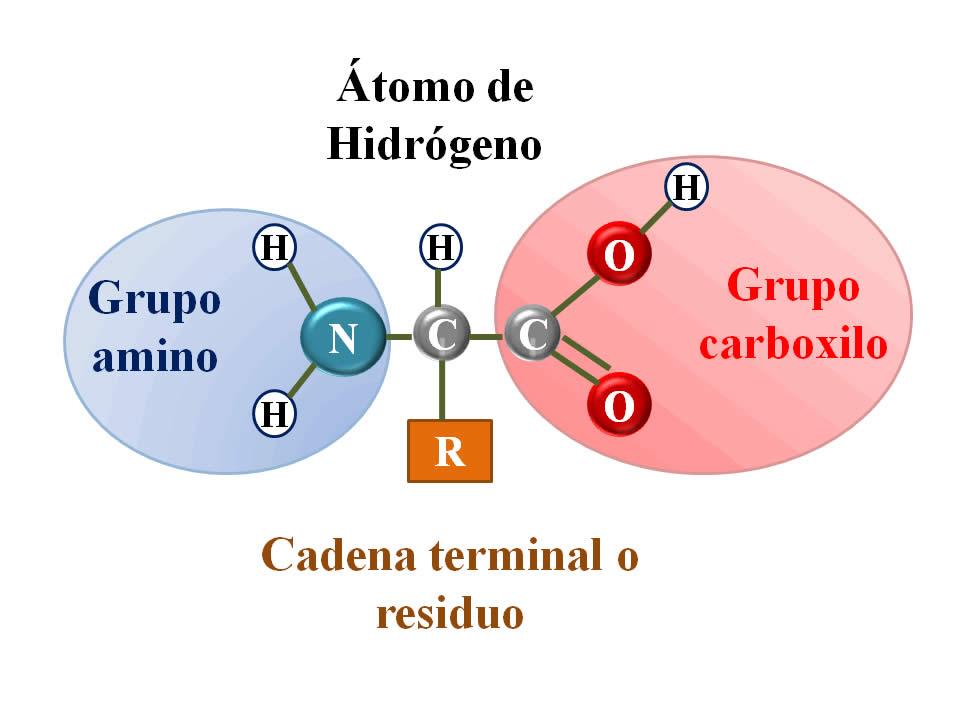 Estructura de las proteinas yahoo dating 1