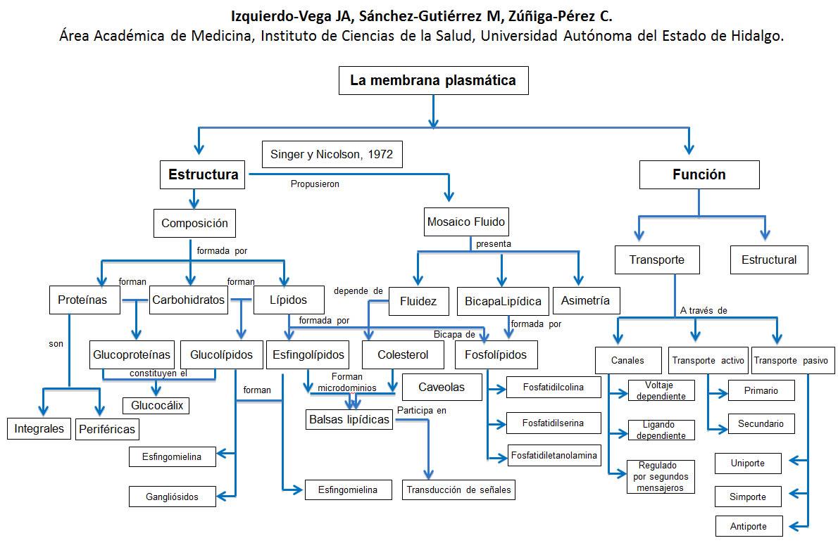 Membrana Plasmática Educación Y Salud