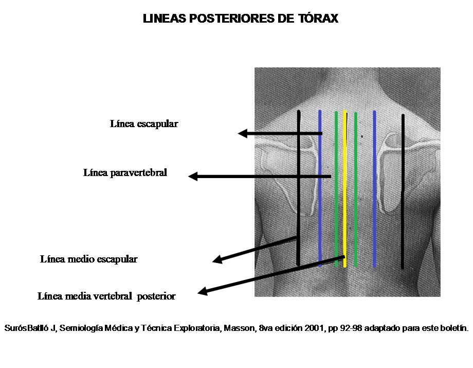Líneas convencionales del tórax utilidad clínica